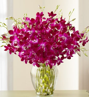 Exotic Breeze? Orchids, + Free Vase