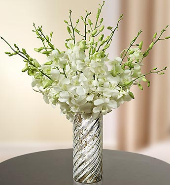 White Elegance Orchids for Sympathy