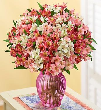 Perfectly Pink Peruvian Lilies