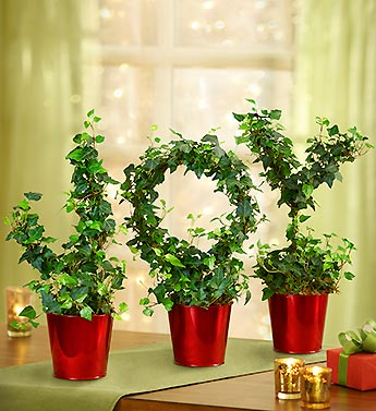 Joy to the World Topiary
