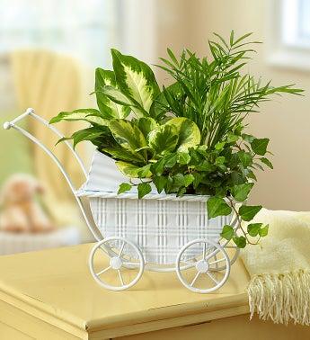 Baby Stroller Garden