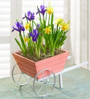 Lovely Wheelbarrow of Bulbs