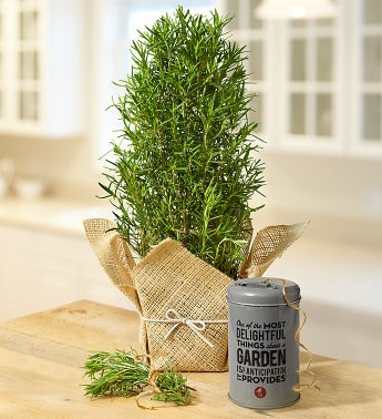Rustic Rosemary Plant