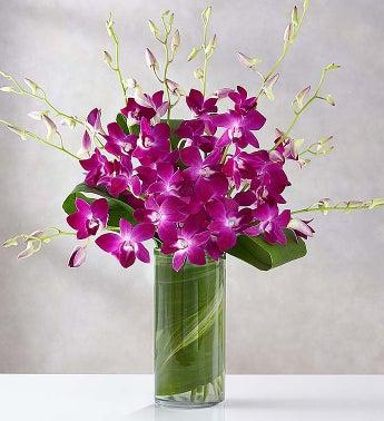 Orchid Embrace?
