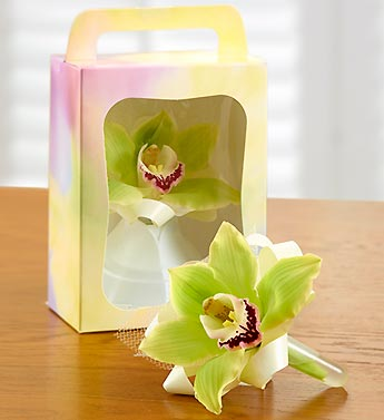 Single Bloom Cymbidium