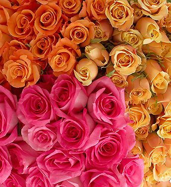 Assorted Roses 250 Stems