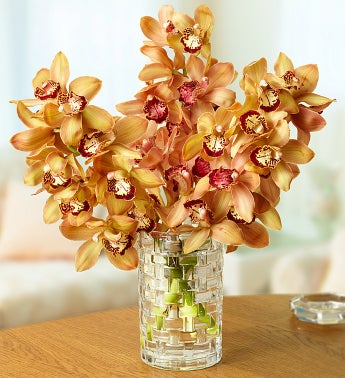 Bronze Cymbidium Orchid Trio