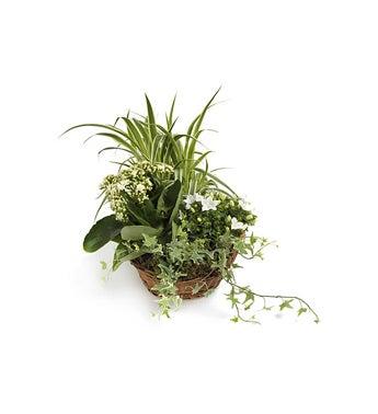 Green Garden Mix