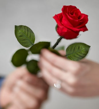 Single Long-Stem Infinite Rose