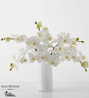 Chic - White Phalaenopsis By Isaac Mizrahi