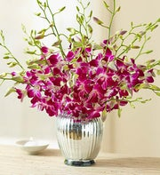 Sympathy Orchids