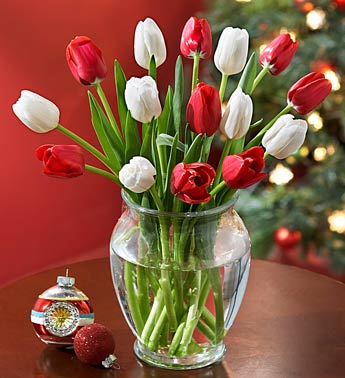 15 stems of red and white tulips