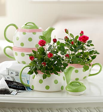 pair of mini rose plants in tea cups