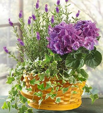 Lavender Dish Garden