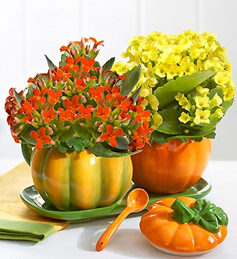 Blooming Pumpkin Sugar and Creamer Set