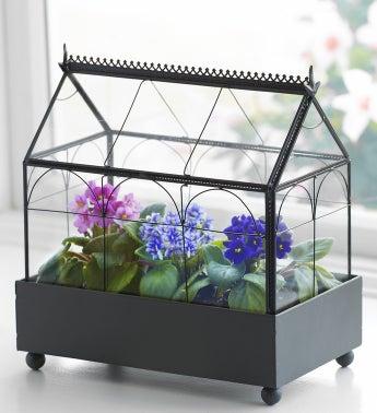 Violet Terrarium