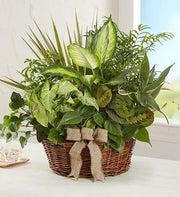 green plant dish garden