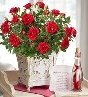 Royal Red Rose