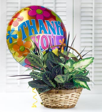 Plant in Planter with Thank You Balloon
