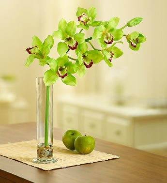 Green Silk Cymbidium Orchid