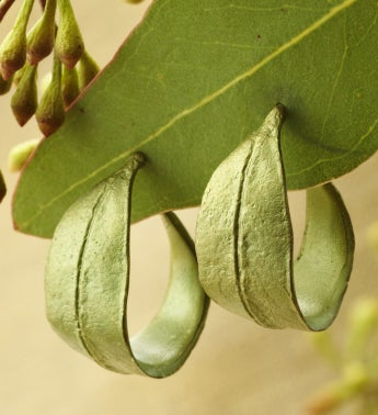 Eucalyptus Hoop Earrings