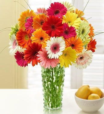 Happy Gerbera Daisies with Cookies, 12-24 Stems