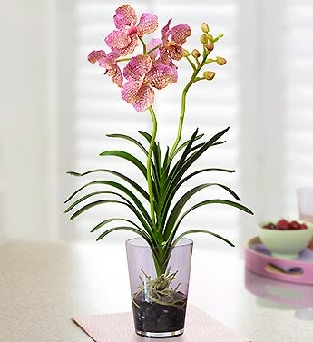 Pretty in Pink Silk Vanda Orchid