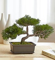 9? Artificial Silk Bonsai Tree