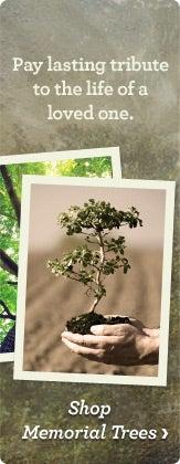 Shop Memorial Trees