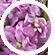 Lavender & Purple Funeral Flowers | 1-800-Flowers.com